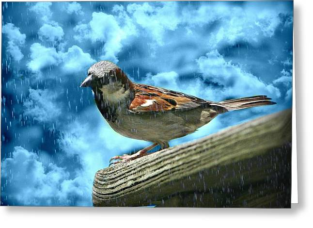 A Chance Of Showers Greeting Card by Barbara S Nickerson