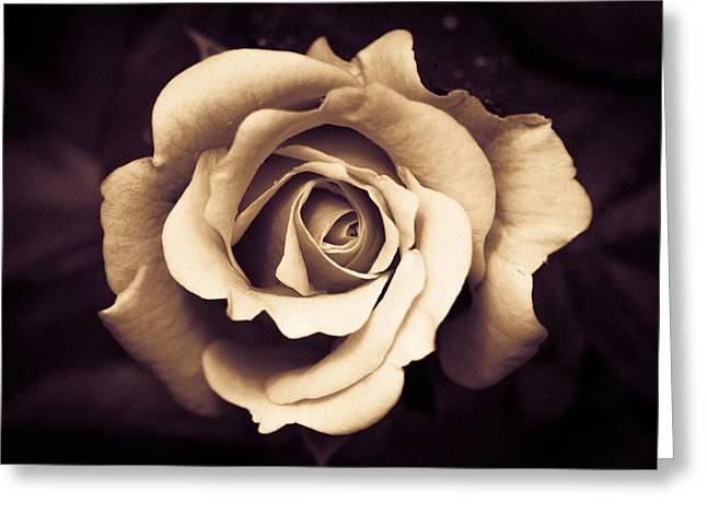 A Chocolate Raspberry Rose Greeting Card