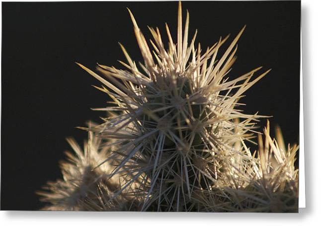 A Cholla Cactus I Greeting Card by Carolina Liechtenstein