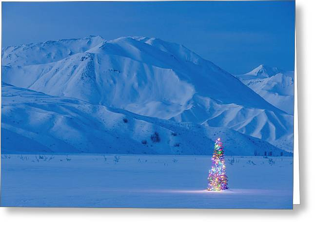 A Christmas Tree Lit Up At Twilight Greeting Card by Kevin Smith
