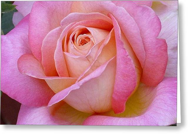 A Classic Rose Greeting Card