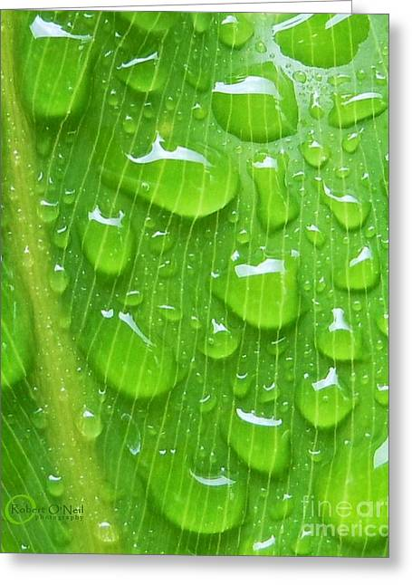 Greeting Card featuring the photograph A Cleansing Morning Rain by Robert ONeil