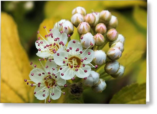 Greeting Card featuring the photograph A Close Look 2 by Gene Cyr