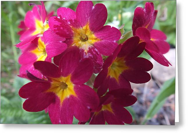 Greeting Card featuring the photograph A Close Look 4 by Gene Cyr