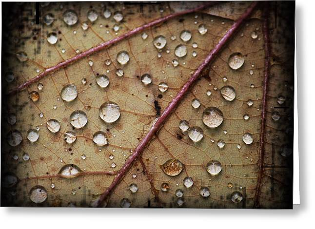 A Close Up Of A Wet Leaf Greeting Card by Andrew Sliwinski