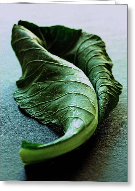 A Collard Leaf Greeting Card