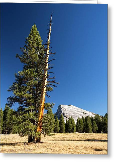 A Colourful Dead Tree Trunk Greeting Card by Ashley Cooper