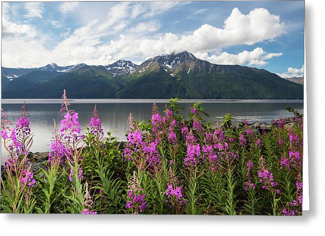 A Colourful Patch Of Fireweed Greeting Card by Doug Lindstrand