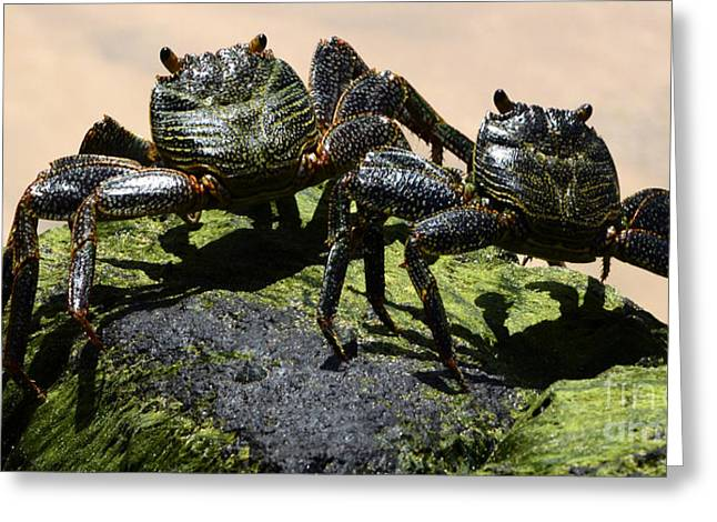 A Couple Of Crabs Brazil Greeting Card by Bob Christopher