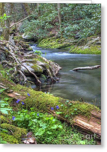 A Creek Side Hike Greeting Card