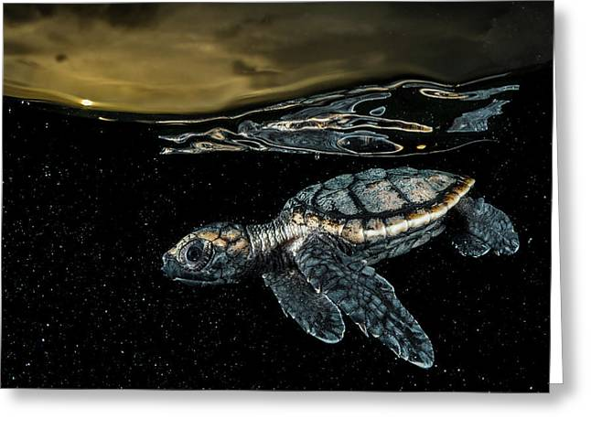 A Critically Endangered Hawksbill Sea Greeting Card by David Doubilet