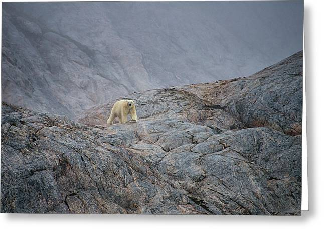 A Curious Polar Bear Approaching A Boat Greeting Card by Andy Mann