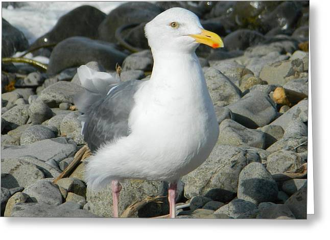 Greeting Card featuring the photograph A Curious Seagull by Chalet Roome-Rigdon
