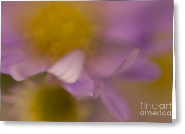 A Curl Of A Petal Greeting Card by Niki Van Velden