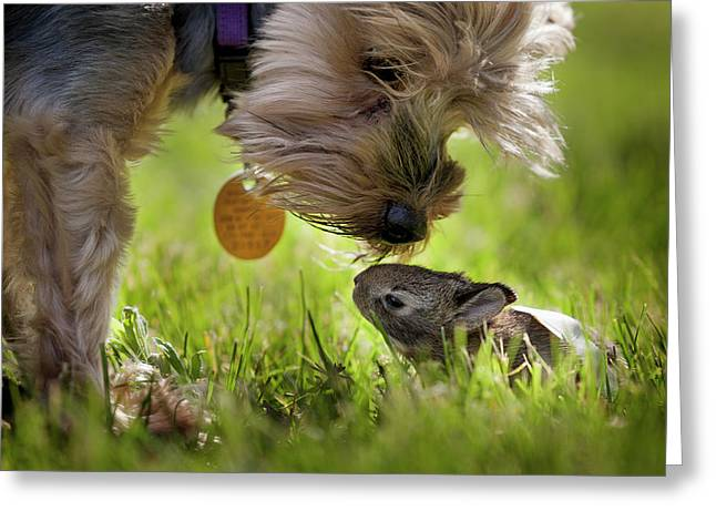 A Cute Yorkie Dog Sniffing A Little Greeting Card by Joey Hayes