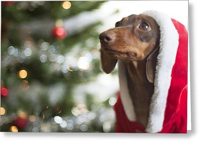 A Dachshund Christmas Greeting Card by Rischa Heape
