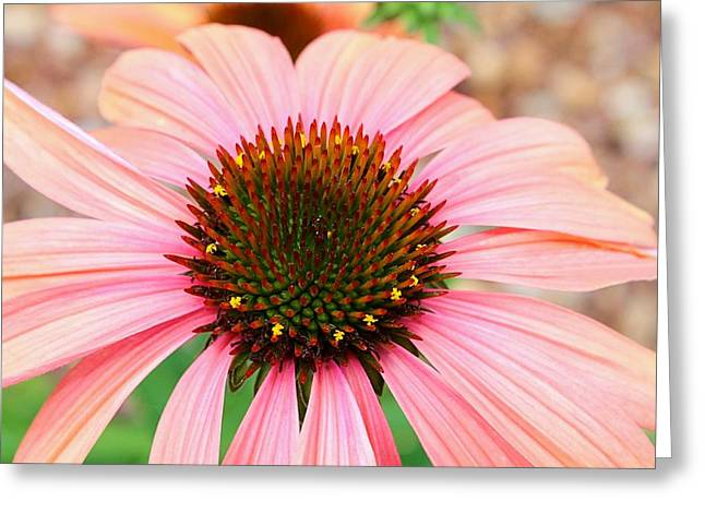 Greeting Card featuring the photograph A Daisy For You by Elizabeth Budd