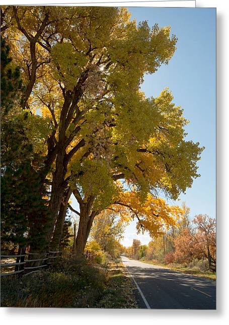 A Day For A Daydream Greeting Card by Allen Lefever