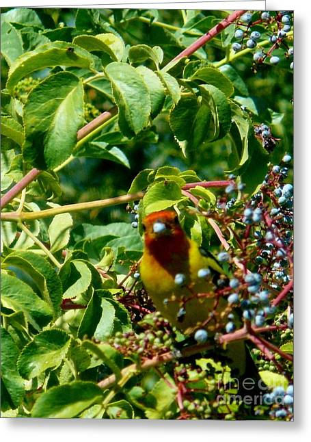 A Day With Mr. Tanager 2 Greeting Card by Jacquelyn Roberts