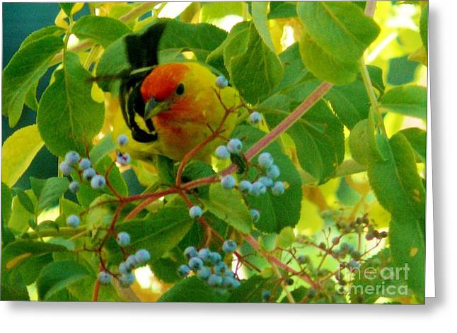 A Day With Mr. Tanager 3 Greeting Card by Jacquelyn Roberts