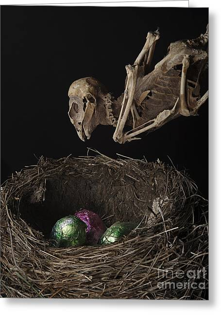 A Dead Bird Flies Into Its Nest Only To Find Chocolate Eggs Greeting Card