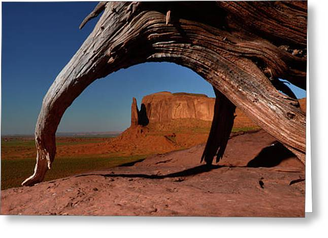 A Dead Mesquite Trees And Buttes Greeting Card