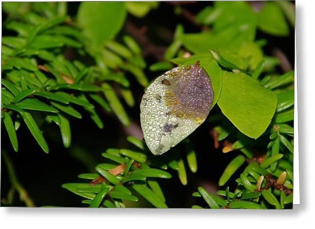A Dew Covered Leaf Greeting Card by Jeff Swan