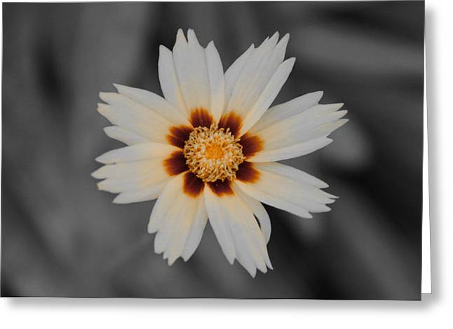 A Different Flower Greeting Card