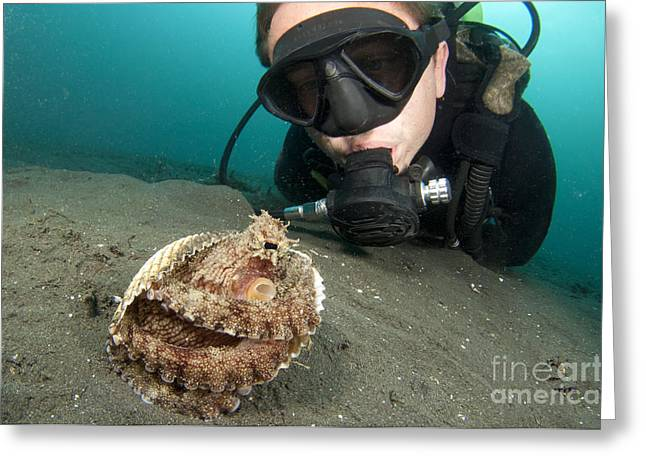 A Diver Looks At A Coconut Octopus Greeting Card by Steve Jones