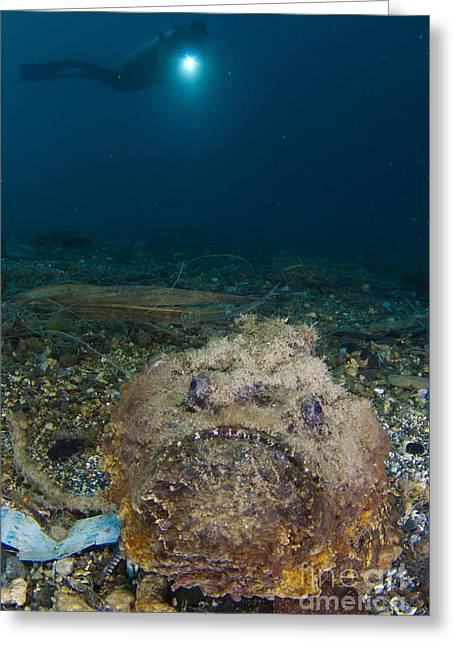 A Diver Looks On At A Giant Stonefish Greeting Card by Steve Jones