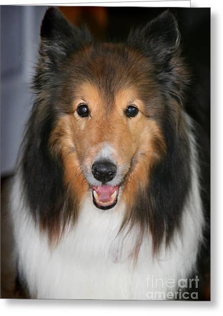 A Dog Named Beau Greeting Card