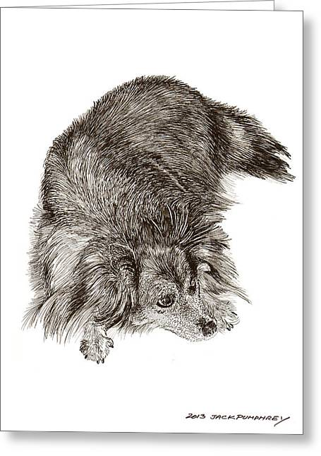 A Dog Named Zorra Greeting Card by Jack Pumphrey