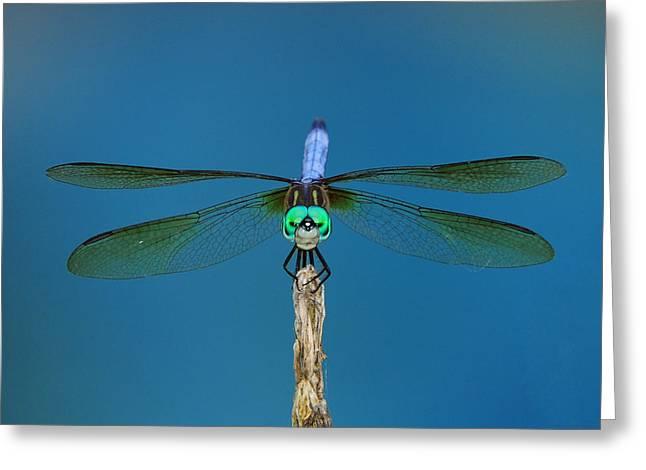 A Dragonfly IIi Greeting Card by Raymond Salani III