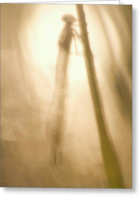 A Dragonfly In Early Morning Greeting Card