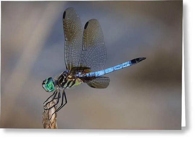 A Dragonfly Iv Greeting Card by Raymond Salani III