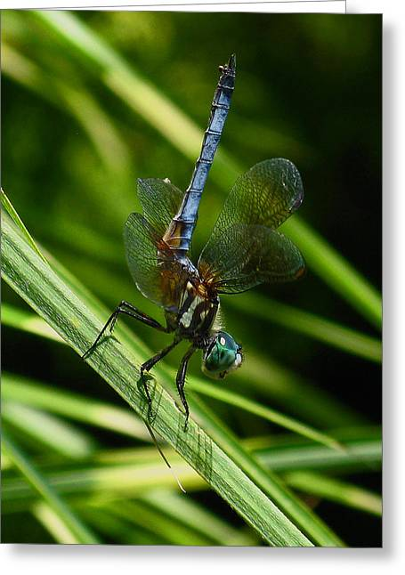 Greeting Card featuring the photograph A Dragonfly by Raymond Salani III