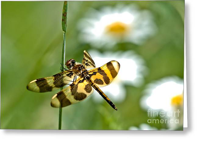 A Dragonfly's Life Greeting Card