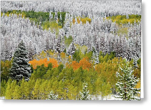 Greeting Card featuring the photograph A Dusting Of Snow by Geraldine Alexander