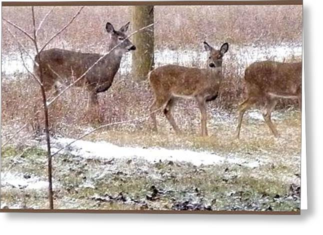 A Dusting On The Deer Greeting Card