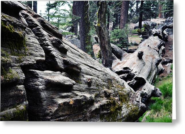 Greeting Card featuring the photograph A Fallen Giant Sequoia by Kyle Hanson