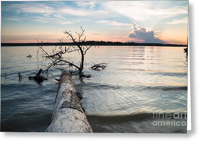 A Fallen Tree And The Evening Sky Greeting Card by Ellie Teramoto
