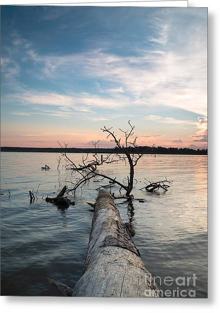 A Fallen Tree In The Dusk Greeting Card by Ellie Teramoto