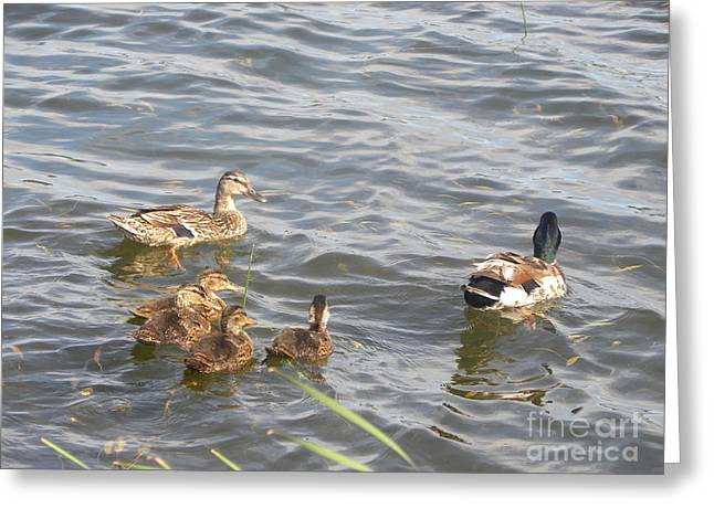 A Family Affair Greeting Card by Cim Paddock