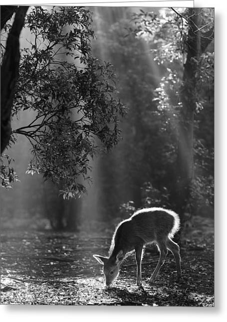 A Fawn In The Forest Greeting Card