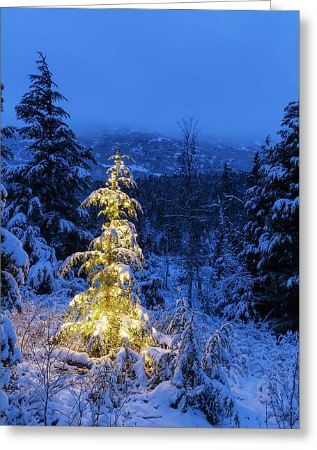 A Festive Mountain Hemlock Evergreen Greeting Card