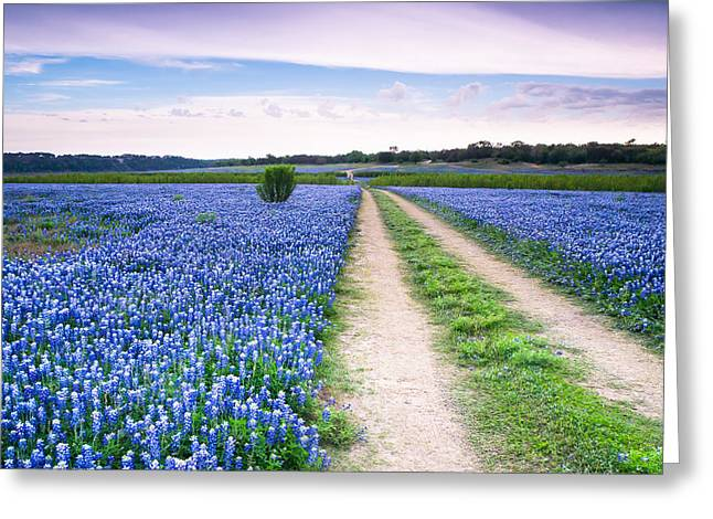 A Field Of Bluebonnets - Wildflower In Texas Greeting Card by Ellie Teramoto