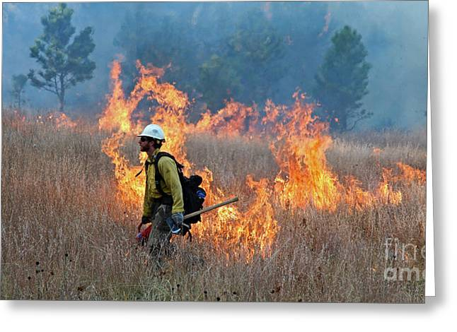 A Firefighter Ignites The Norbeck Prescribed Fire. Greeting Card by Bill Gabbert