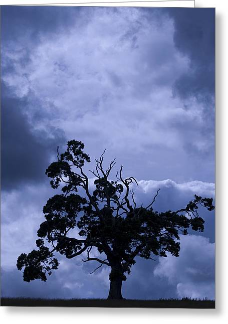 A Flash Of Blue Tree Greeting Card by Sally Ross