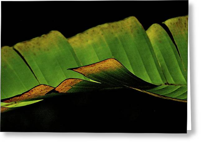 A Floating Heliconia Leaf Greeting Card by Lehua Pekelo-Stearns
