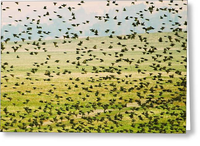 A Flock Of Freedom Greeting Card